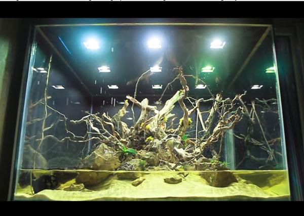 Một mẫu chuồng nuôi rồng được thiết kế như hoang đảo thực sự