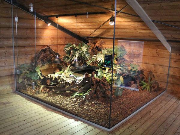 Mẫu chuồng nuôi rồng cảnh được làm bằng kính, kích thước khá rộng