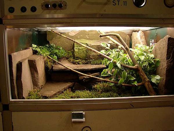 Chuồng nuôi rồng làm bằng tủ kinh được thiết kế giống như môi trường sống thực tế của rồng nơi hoang dã