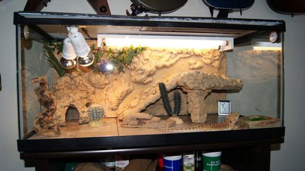 Kiểu chuồng nuôi rồng nam mỹ làm bằng kính bên trong có hang trú làm bằng đá và trang trí với các cây xương rồng tạo ra một môi trường giống như trên hoang mạc