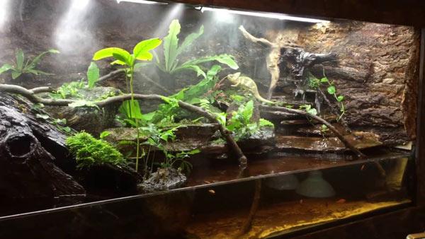 Với mẫu chuồng này người nuôi rồng nam mỹ muốn tạo ra một không gian thủy sinh như những ngôi rừng rậm nhiệt đới ở khu vực Nam Mỹ