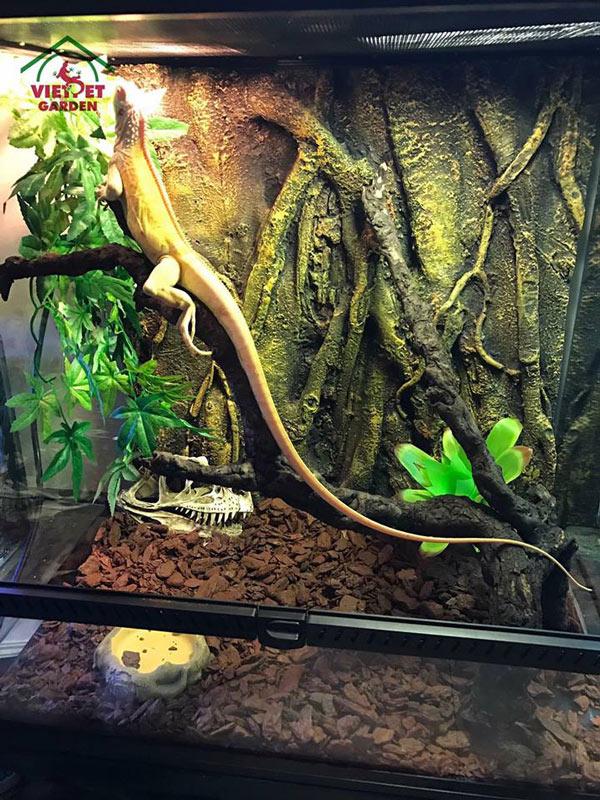 Đây là một sản phẩm chuồng nuôi rồng do Việt Pet Garden thiết kế cho khách hàng đã mua rồng nam mỹ tại shop