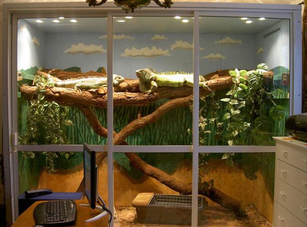 Chuồng nuôi rồng nam mỹ thiết kế trong nhà rất thích hợp với các chú rồng nam mỹ có kích thước lớn