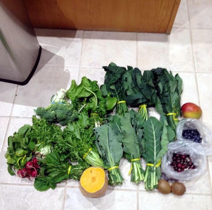 Rồng nam mỹ chủ yếu ăn thực vật