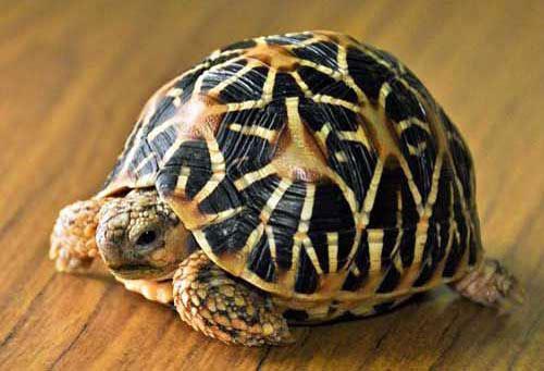 MỚI TOP 4 Loại rùa cảnh đẹp dễ nuôi ở Việt Nam được nhiều người mua 5