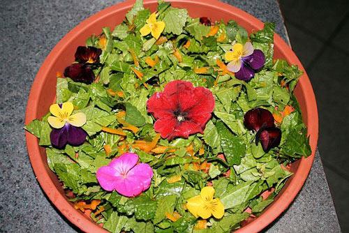Bạn nên trộn đều các loại rau, củ, quả, hoa trong bữa ăn của rồng hằng ngày nhưng lưu ý nên theo đúng tỉ lệ đã ghi trong bài