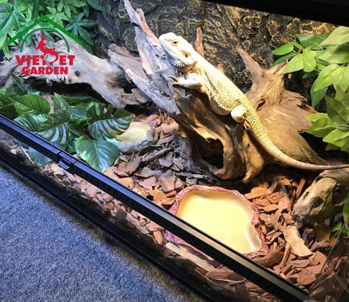 Hình ảnh chuồng nuôi Rồng Úc sử dụng vỏ thông đỏ làm lót nền