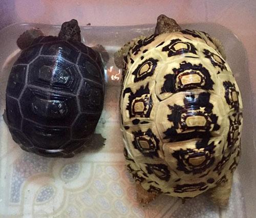 MỚI Giới thiệu địa chỉ Shop bán rùa cạn uy tín ở Hà Nội và TP. HCM 17