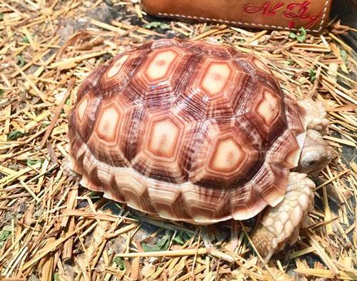 MỚI Giới thiệu địa chỉ Shop bán rùa cạn uy tín ở Hà Nội và TP. HCM 18