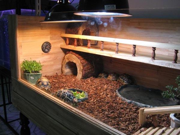 Mẫu bể nuôi rùa cạn