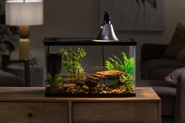 Đây là hình ảnh một bể nuôi rùa nước rất thích hợp với những người muốn nuôi rùa cảnh tại văn phòng hoặc trong phòng khách