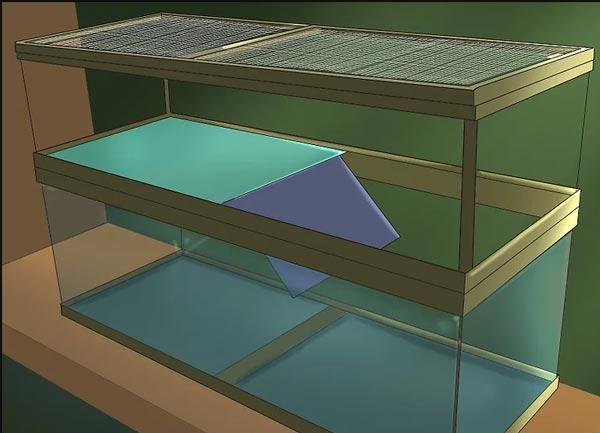 Nuôi rùa tai đỏ bạn cần chuẩn bị một chiếc bể nuôi phù hợp với kích thước rùa và số lượng rùa
