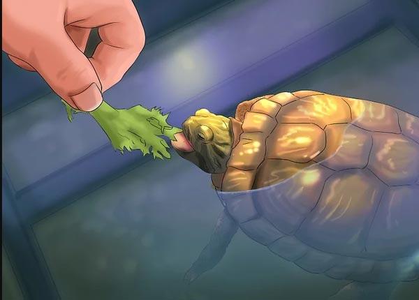 Mỗi một loài rùa nước sẽ có một chế độ ăn uống khác nhau