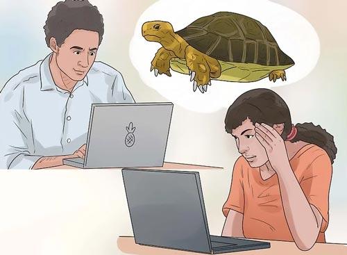 Trước khi bắt đầu nuôi loài rùa cạn nào các bạn cũng nên tìm hiểu kỹ thuật nuôi và cách chăm sóc chúng