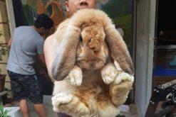 Anh Thành và thỏ khổng lồ