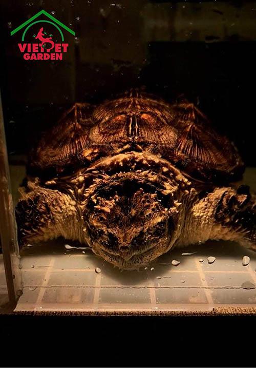 Các loại rùa nước